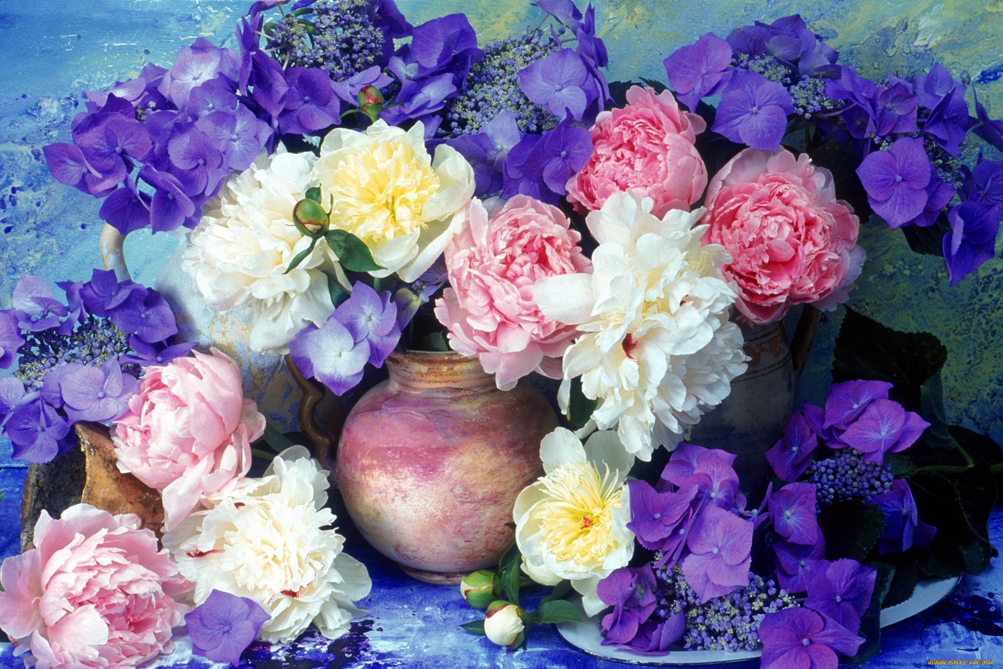 пениса цветы пионы открытки красивые птицы